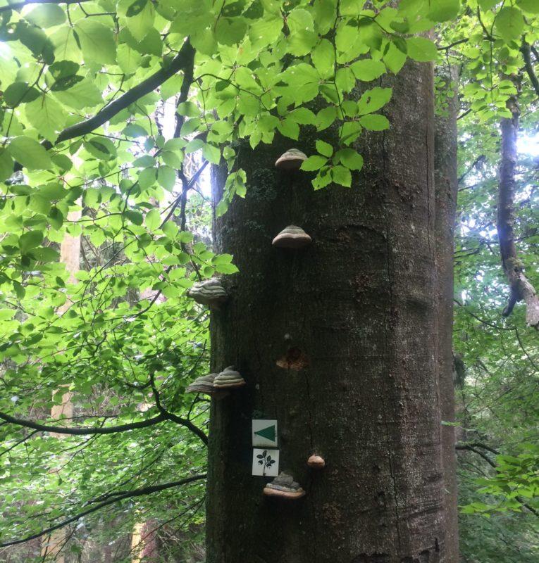 Wanderung auf den Falkenstein