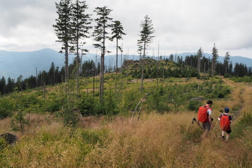 Schachten im Bayerischen Wald