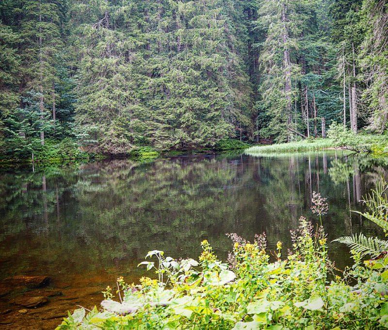Höllbachgspreng, Bayerischer Wald