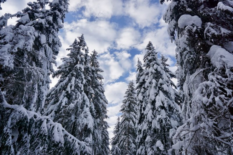 Winterwonderland Gosau