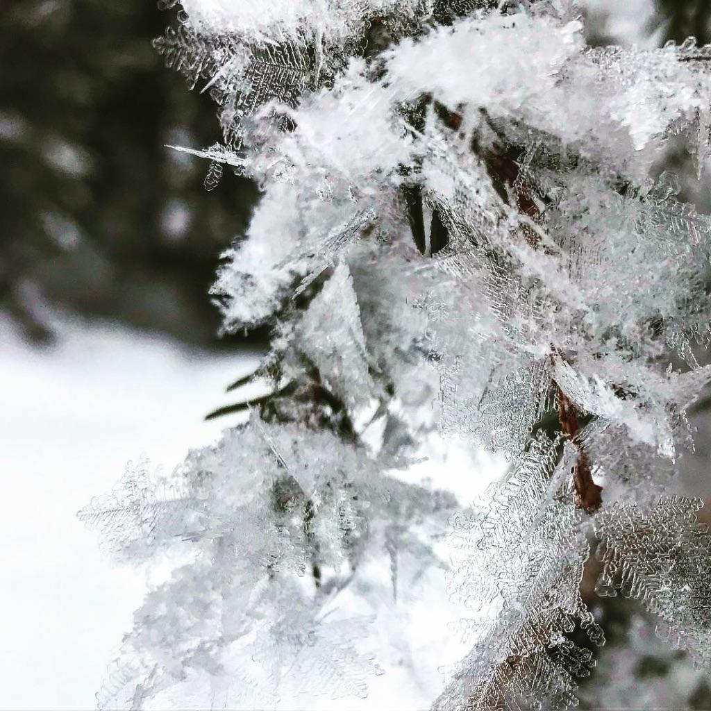 Eiskristalle beim Schneeschuwandern