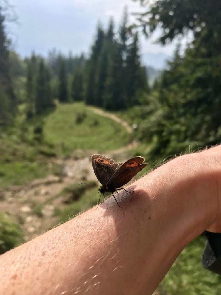 Schmetterlinge Kaisergebirge, Etappe 3 Kaisertour
