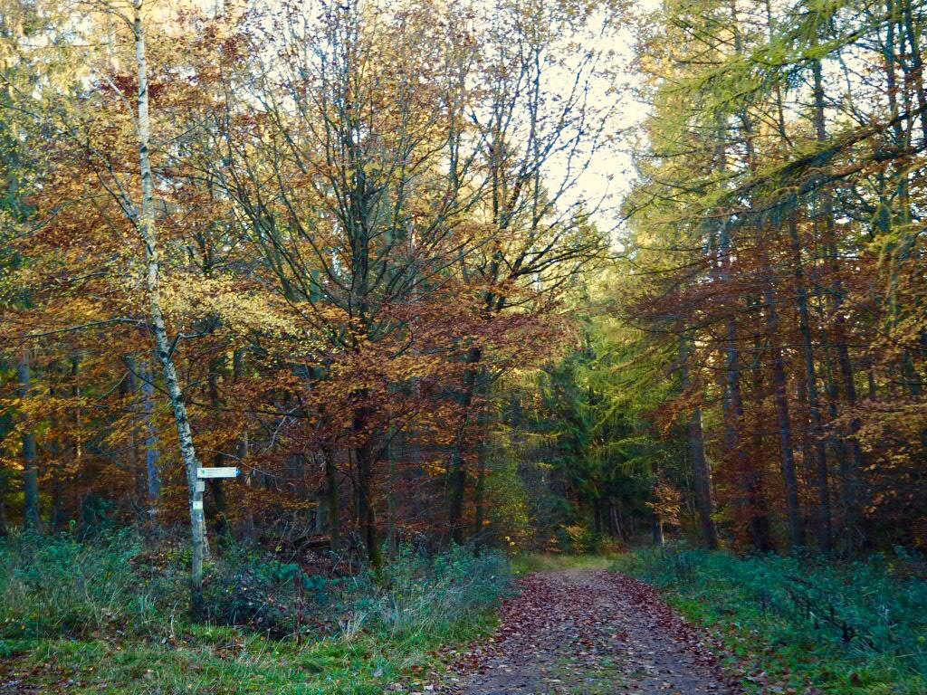 Herbststimmung auf dem Eifelsteig