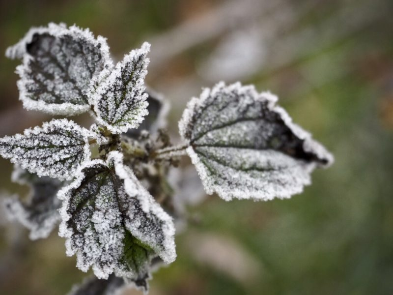 Frostige Natur