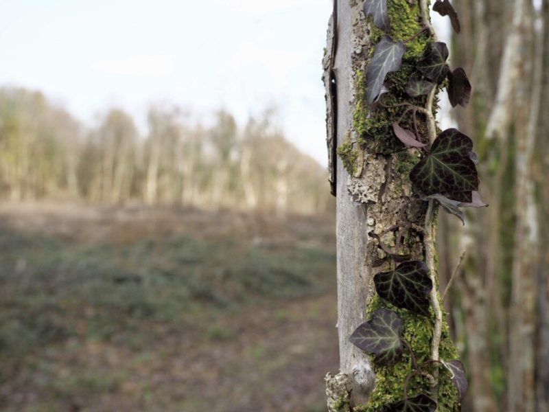 Regionaler Naturpark der Ardenne