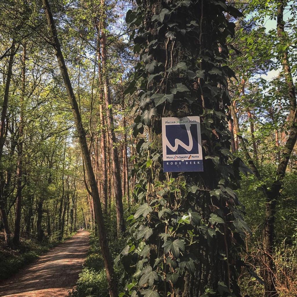 Kiefernwald Nationalpark de Meinweg