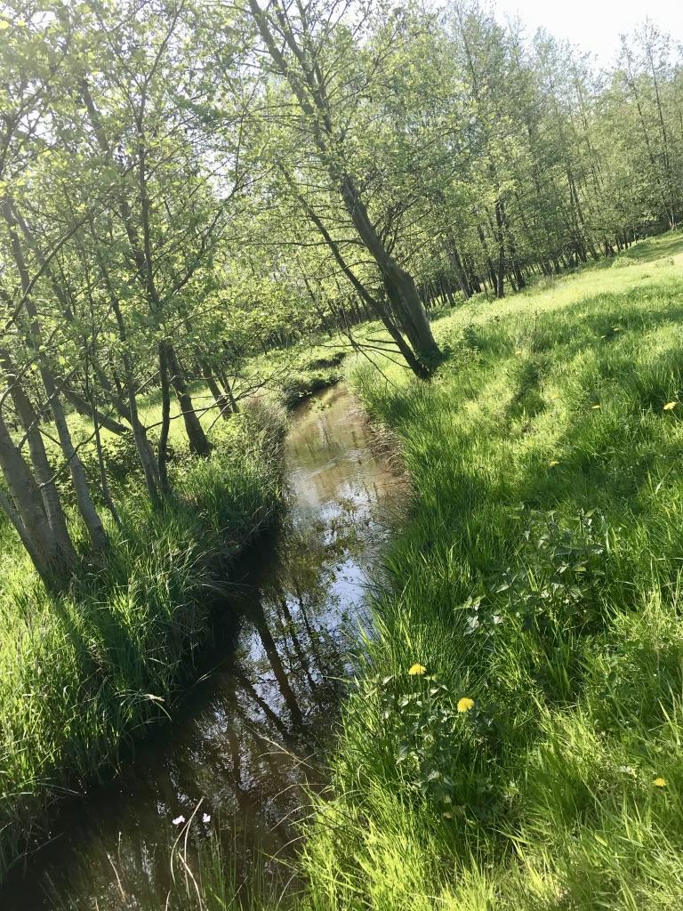 Der Rothenbach / Rode Beek im Naturpark Maas-Schwalm-Nette.