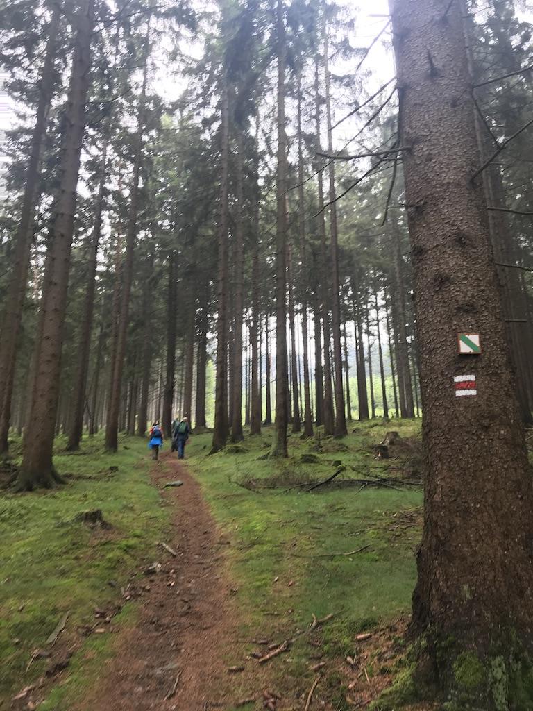 Wanderwege im Oberpfälzer Wald um Bad Neualbenreuth