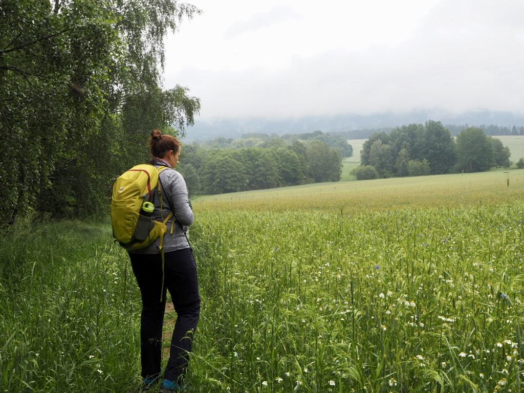 Dichte Wälder und Weite Wiesen rund um den Tillenberg (Dylen).