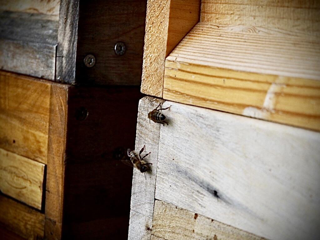 Die Bienenstöcke der Naturparkschule am Teimer Bavenhausen