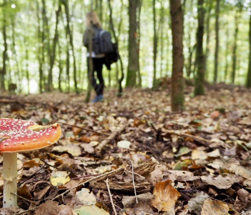 Osterbergweg: Wandern durch Wald