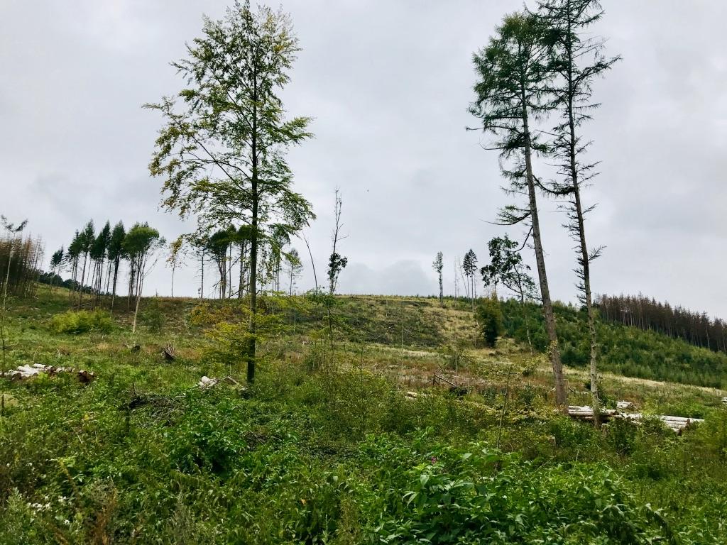 Landschaft am Osterbergweg, Lügde