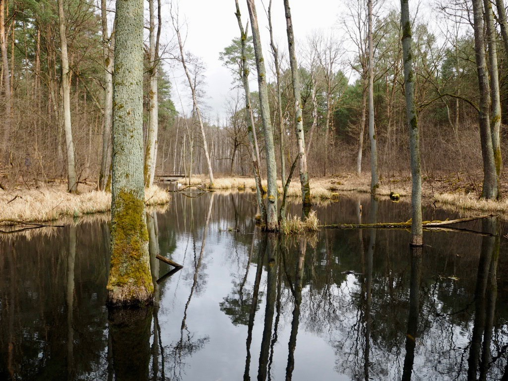 An der Briese im Naturpark Barnim in Brandenburg