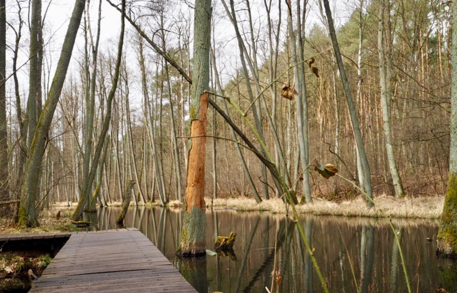 An der Briese im Naturpark Barnim in Brandenburg