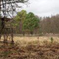 Hochsitz im Naturpark Barnim
