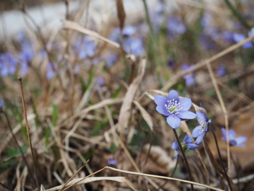 Frühlingserwachen im Naturpark Barnim