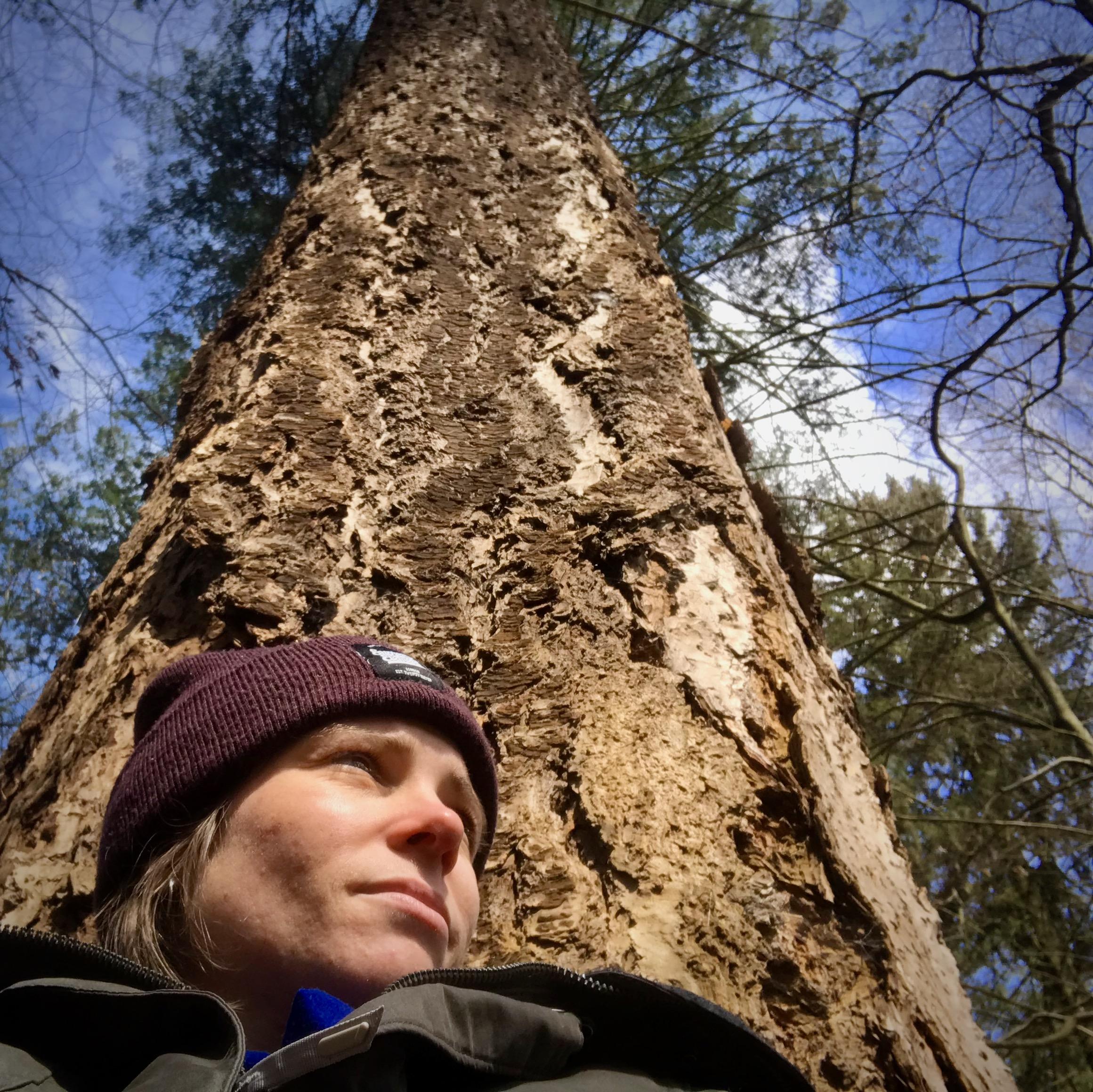 Der Sitzplatz: Baum in Eberswalde, Brandenburg