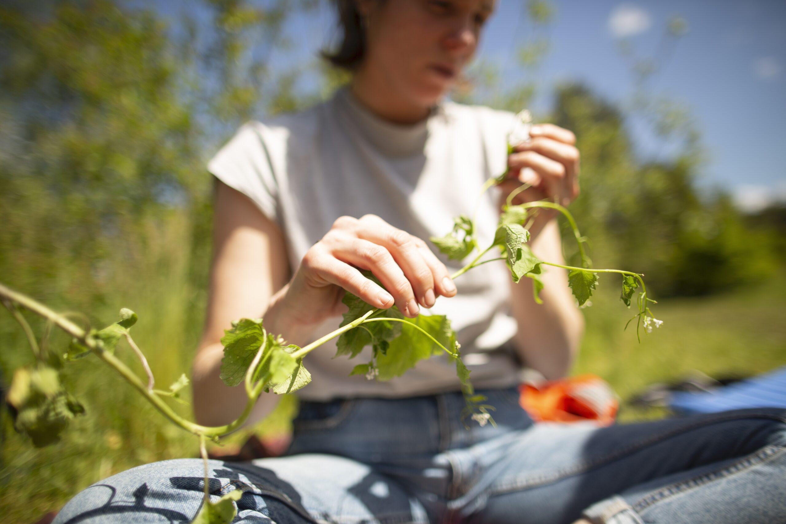 Wildnispädagogik-Ausbildung: Pflanzenkunde