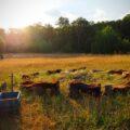 Wildnispädagogik-Ausbildung bei der Wildnisschule Lupus in Brandenburg
